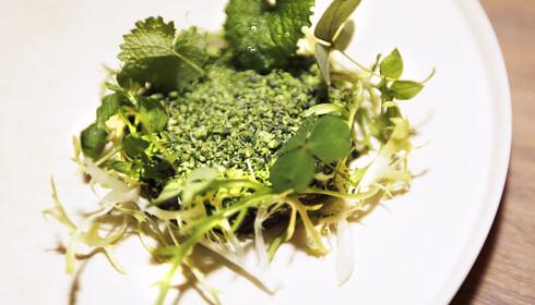 FAVORITT: I Oslo peker Frognerrestauranten Bokbacka seg ut som mulig ny michelinrestaurant. Her er brokkoli og urter på tartar av hjort. Foto: Thomas Rasmus Skaug