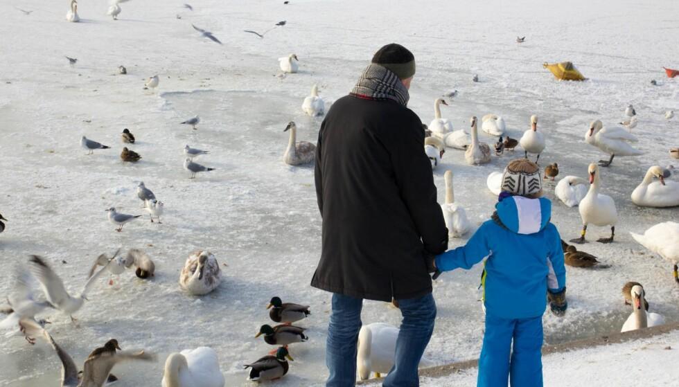 SEMINAR: Fravær av kontakt med far er en stor risikofaktor for barns utvikling, skriver artikkelforfatteren. Mannsforum arrangerer i kveld seminar om delt bosted og barneloven i Litteraturhuset i Oslo. Foto: Shutterstock / NTB Scanpix