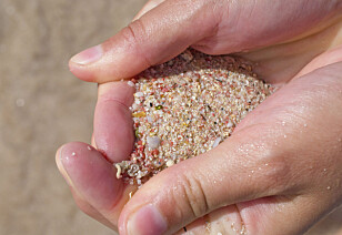 ROSA SAND: Fordi en del av sanden er laget av finmalte koraller, er den flere steder helt rosa. Foto: Torild Moland, Magasinet Reiselyst