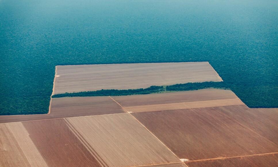 AVSKOGING: Enorme arealer med brasiliansk regnskog kan forsvinne hvis laksenæringen i Norge skal femdobles. Bildet over viser områder som allerede har blitt avskoget i Brasil som en følge av soyaproduksjon. Foto: Kyrre Lien/Regnskogfondet.