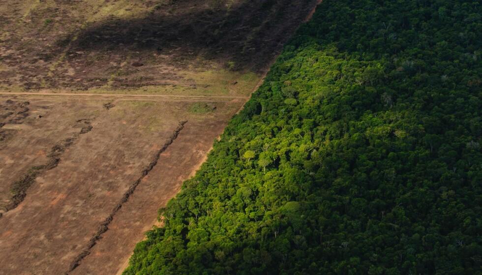 HUGGES NED: Skogen forsvinner raskt i deler av Latin-Amerika. Den økende etterspørselen etter soya er en av grunnene. Foto: NTB Scanpix