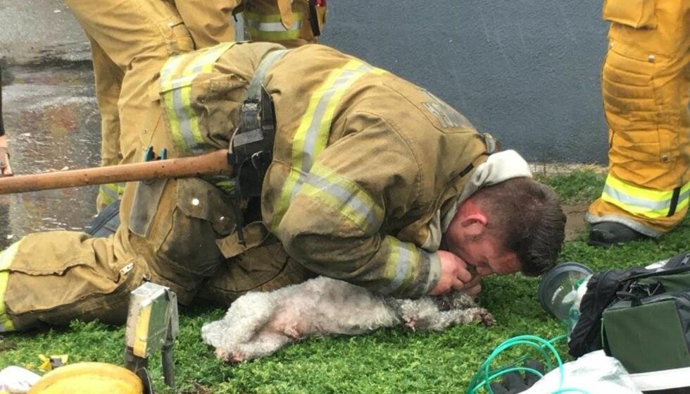 MUNN TIL SNUTE: Brannmann Andrew Klein spurtet først inn i en brennende leilighet for å hente ut hunden Nalu. Han nektet å gi seg i redningsforsøket. Foto: Santa Monica Fire Department