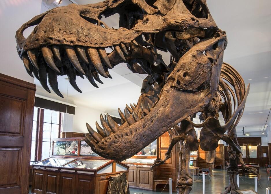 IKKE RIKTIG: Tidligere denne uken opphevet Klima- og miljødepartementet fredningen av museumsinteriøret i andre og tredje etasje i Geologisk museum, på grunn av en saksbehandlingsfeil hos Riksantikvaren. Nå sier jusprofessor at denne opphevingen ikke kan være riktig. FOTO: Naturhistorisk museum