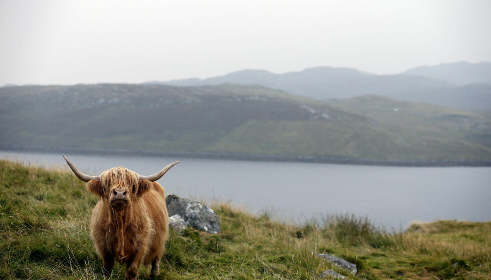 ØY-KRIM: Peter Mays Lewis-trilogi foregår på øya Isle of Lewis i Ytre Hebridene.  Foto: NTB/Scanpix