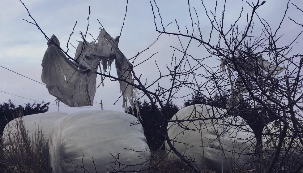 I TRÆRNE: På værharde Lista tar vinden med seg plasten fra rundballene opp i trærne. Det har irritert Marika Berven lenge. Nå har hun startet en Instagram-kampanje mot plastavfallet i landbruket. Foto: Marika Berven