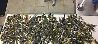 Da de ansatte kom på jobb, lå 395 døde fugler utenfor bygningen