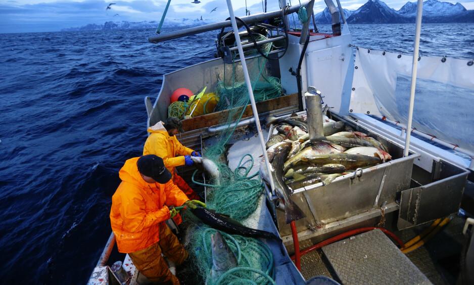 VIL SIKRE MATKAMMERET: Et lite uhell ved en oljeinstallasjon kan få dramatiske følger for det globale økosystemet i havet, skriver artikkelforfatteren. Bildet er fra skreifiske ved Senja. Foto: Cornelius Poppe / NTB Scanpix
