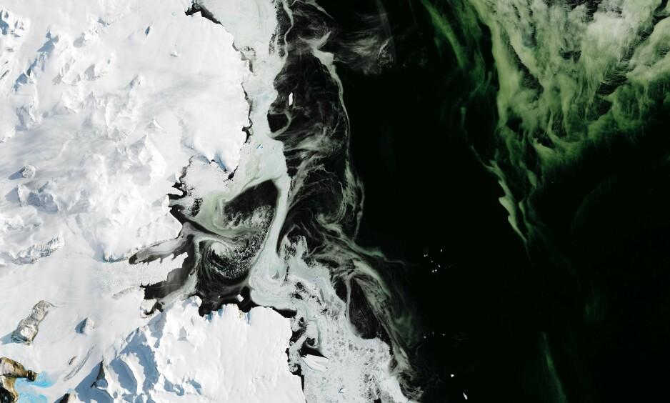 SJOKKFUNN: Forskere er sjokkerte over oppdagelsen av en massiv smeltehendelse som rammet store områder i Vest-Antarktis i fjor. Bildet viser havområder like ved Ross-havet. Illustrasjonsfoto: Joshua Stevens / NASA / NTB Scanpix