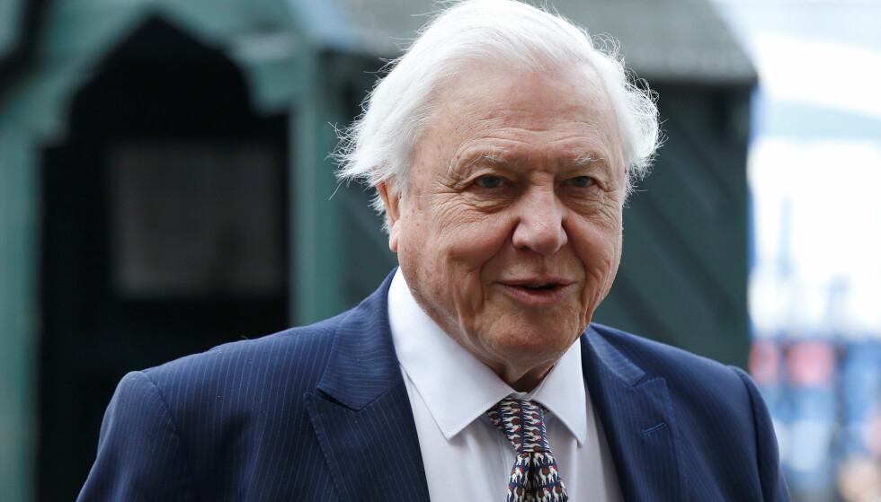 GIR NAVN: TV-personligheten David Attenborough får en øyenstikker oppkalt etter seg. Foto: REUTERS/Suzanne Plunkett/File Photo