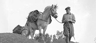 NY UTVIKLING I: Noen som kjenner igjen denne soldaten og hesten på Toten?