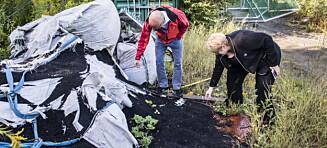Slo alarm om kunstgressbaner: Nå kan norske forskere ha funnet en løsning