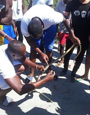 DREPTE SLANGE: Denne slangen var på vei inn i teltet som huser 208 menn i sommer. Foto: Privat
