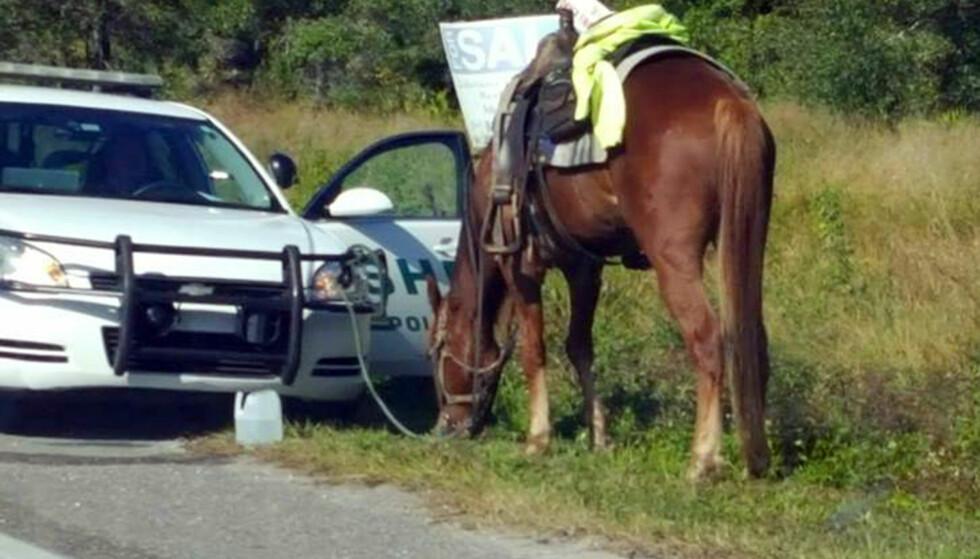 FYLLERIDNING: Hesten er bundet til politibilen til Polk County. Den 58 år gamle kvinnen ble pågrepet for å ha ridd på hesten med promille. Foto: Diane Dodge via AP / NTB scanpix