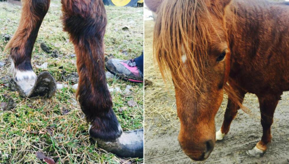 VANNSKJØTSEL: Hestene skal ha grodd så lange hover at de har problemer med å stå oppreist. Foto: Privat