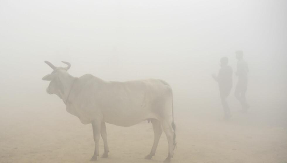 SMOG: To menn er omgitt av smogen i New Delhi, torsdag 9. november. Foto: AP Photo/R S Iyer