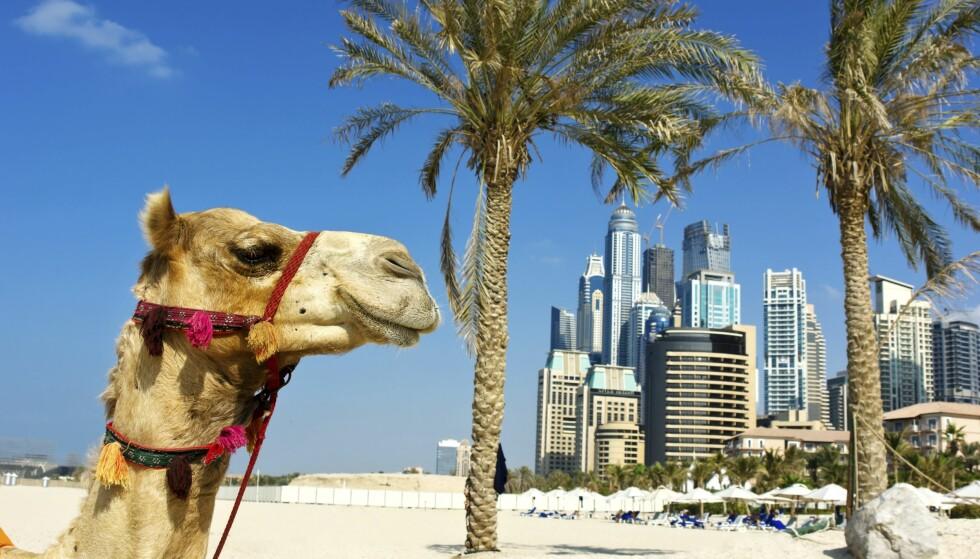KONTRASTER: Dubai er hypermoderne, men du finner også den gamle beduiner-kulturen i dette fascinerende turistlandet. Foto: Shutterstock / NTB Scanpix