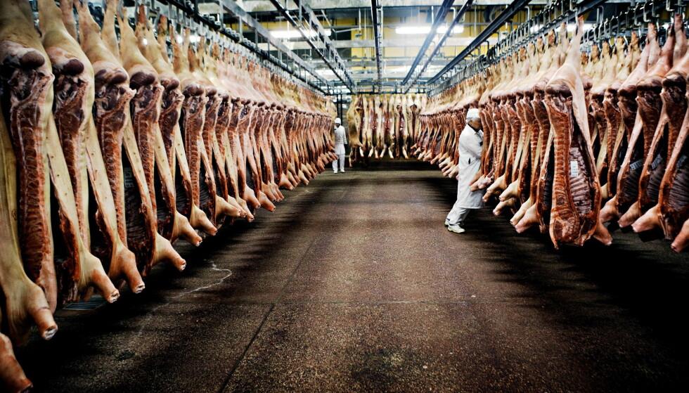 VIL HA OVERVÅKNING: Dyrevernalliansen ber om at Norge følger etter Frankrike og Storbritannia, og innfører videoovervåkning av slakterier. Her fra Norturas slakteri i Tønsberg Foto: Jørn H. Moen / Dagbladet