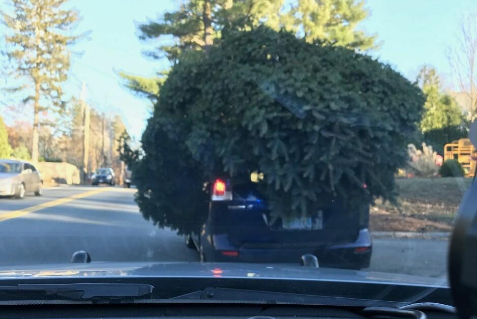 JUL MED DIN GLEDE: Denne formen for frakt av juletrær er ikke noe politiet oppfordrer til. Foto: Sudbury Police Department
