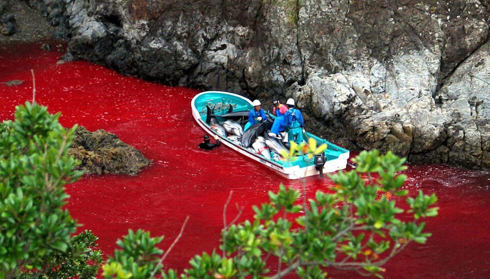 SNAKKER UT: Åtte år etter at den lille japanske byen havnet på verdenskartet for sin fangstvirksomhet, snakker de ut. Foto: AFP PHOTO / Sea Shepherd Conservation / NTB Scanpix