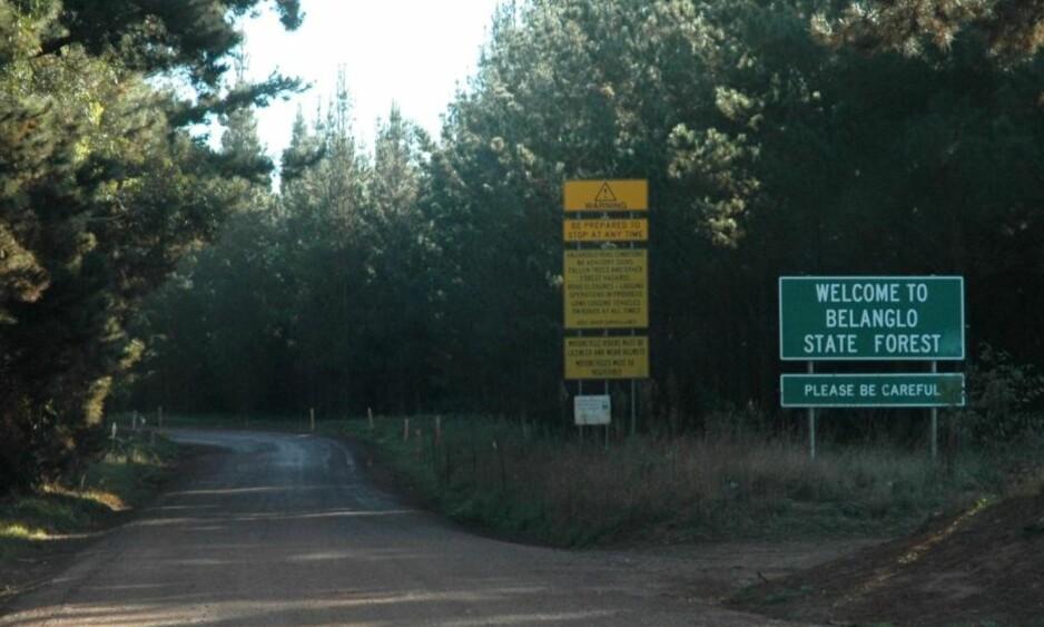 Beryktet skog: I løpet av de 25 siste årene har ni lik blitt funnet her inne. Foto: Ajayvius/Wikimedia Commons