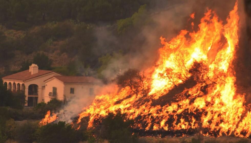 750 HJEM ØDELAGT: Hittil har storbrannen «Thomas» ødelagt cirka 1000 bygninger, hvorav 750 privatboliger. På dette udaterte bildet fra en av de siste dagene er brannen bare få meter fra en bygning i Santa Barbara County. Foto: AFP/Santa Barbara County Fire/NTB Scanpix
