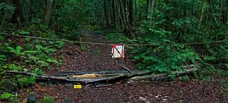 Raser etter video av død person i den «hjemsøkte» selvmordsskogen Aokigahara