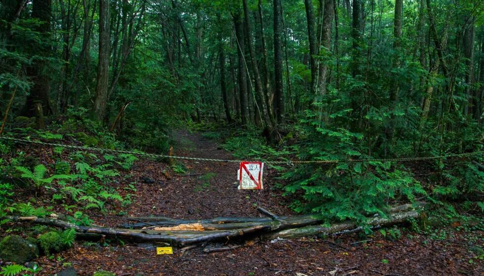 AOKIGAHARA: 100 personer tar hvert år livet sitt i Aokigahara-skogen i Japan. Den verdenskjente YouTuberen Logan Paul har fått massiv kritikk etter at han lastet opp en video fra stedet. Foto: NTB Scanpix
