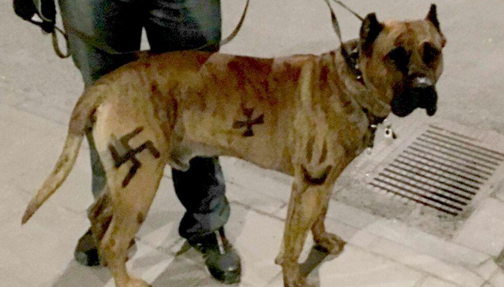 DØMT: Mannen ble dømt for symbolene han malte på hunden. Foto: Polisens Forundersökningsprotokoll