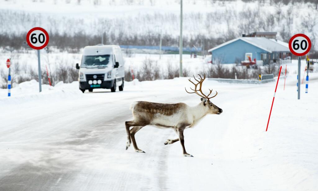 DRAMATISK KONSEKVENS: Finnmark kan miste fire representanter på Stortinget hvis sammenslåingen med Troms blir et faktum. Det er dramatisk, mener professor. Foto: Heiko Junge / NTB scanpix