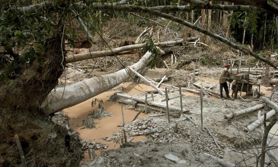 LETER ETTER GULL: En gruvearbeider vasker sand og jord på leting etter gull. Bildet er fra Amazonas-regnskogen I Brasil. Foto: NTB scanpix