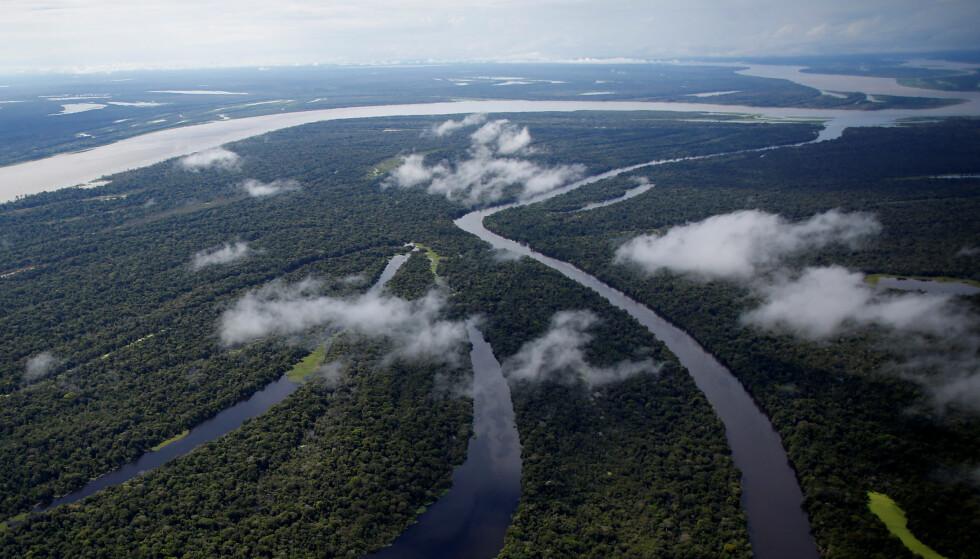 TRUET: Amazonas nærmer seg et punkt hvor avskogingen kan potensielt true hele regnskogens eksistens. Foto: Bruno Kelly / Reuters / NTB Scanpix