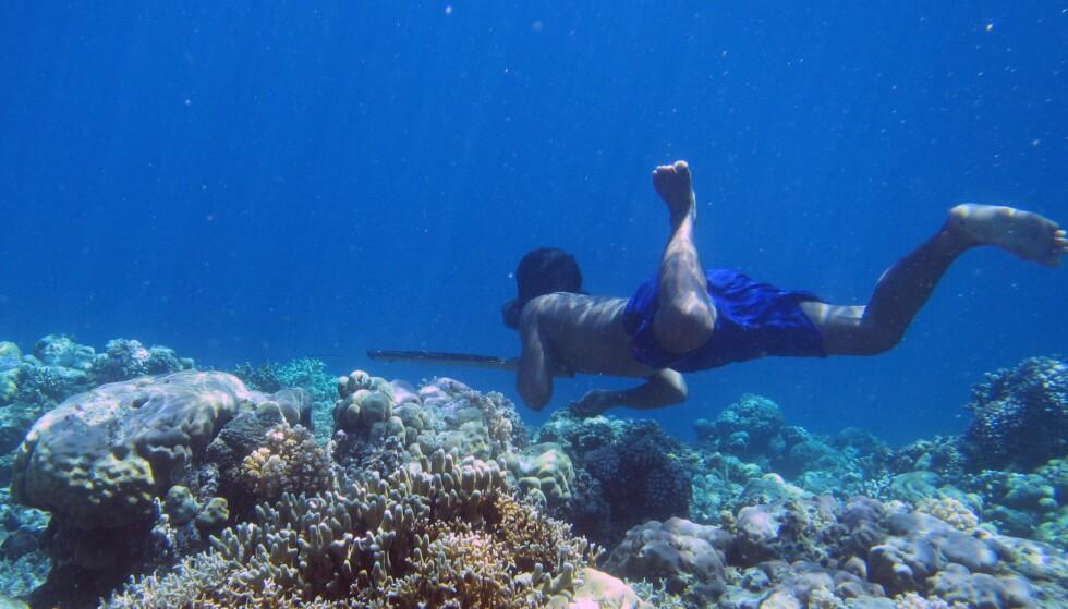 LENGE UNDER VANN: Bajau-folket, som lever i Sørøst-Asia, kan være under vann i flere minutter. Der jakter de fisk og skalldyr. Foto: NTB scanpix