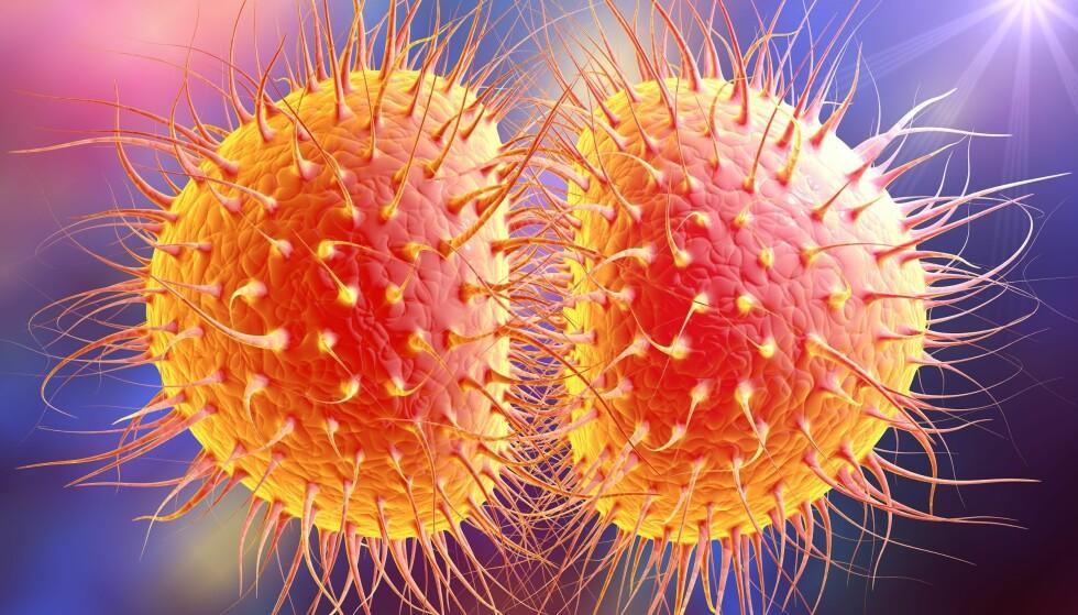 MOTSTANDSDYKTIG: Bakterien Neisseria gonorrhoeae, som forårsaker gonoré, og som blir stadig mer motstandsdyktig mot medisiner. Illustrasjon: Kateryna Kon / Shutterstock / NTB scanpix