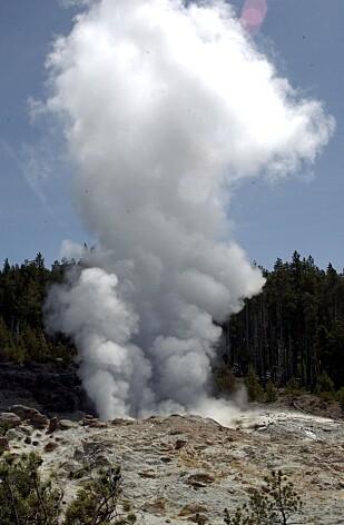 GEYSIR: De viktigste naturattraksjonene i nasjonalparken Yellowstone er geysirer, varme kilder og andre geotermiske egenskaper. Foto: Neal Ulevich/AP/Scanpix