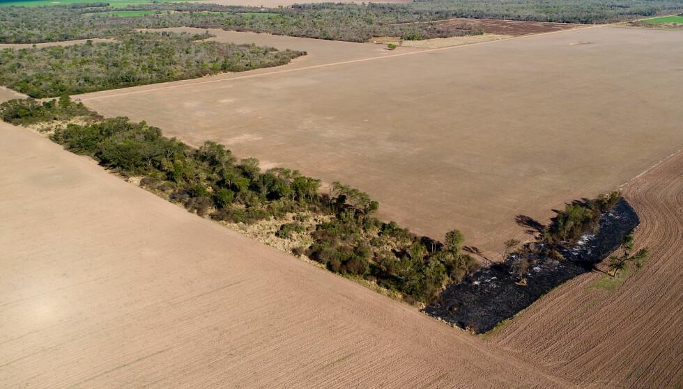 DRAMATISK: Ikke noe annet sted i verden forsvinner skogen så raskt som i Gran Chaco. Mye av avskogingen skjer for å dyrke soya. Norske banker og Oljefondet har eierinteresser i soyagigantene, viser en ny rapport. Foto: Jim Wickens