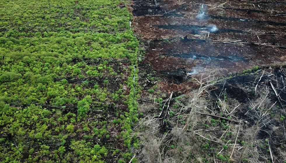ØDELEGGELSER: Flyfoto fra mars i år av regnskog i Indonesia som er svidd av og klargjort til å bli palmeoljeplantasje. Den gode nyheten er at omsetningen av avansert biodrivstoff øker kraftig. Foto: AFP PHOTO / NTB Scanpix