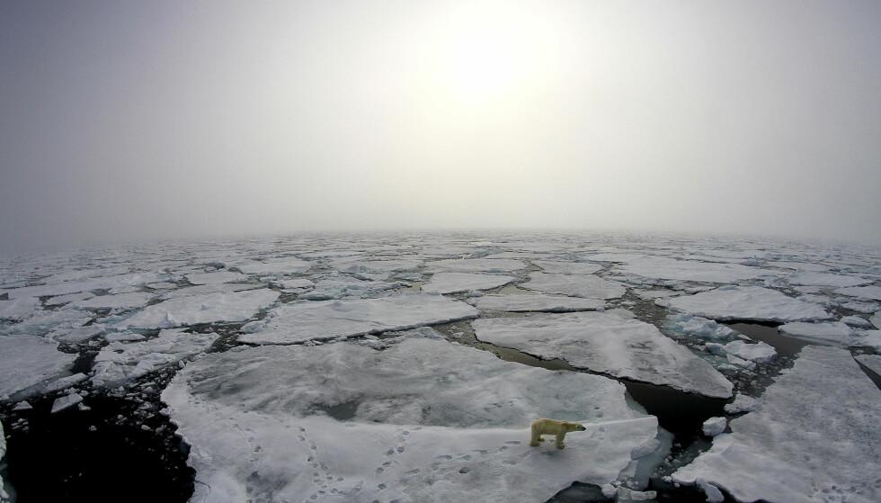 TYNN IS: Målinger viser at konsentrasjon av is rundt Arktis er alarmerende liten. Gammel, tykk is er nesten borte. Tilbake er førsteårsis som knekker fort i dårlig vær og som smelter raskere. Foto: Marcos Porcires / Norsk Polarinstitutt