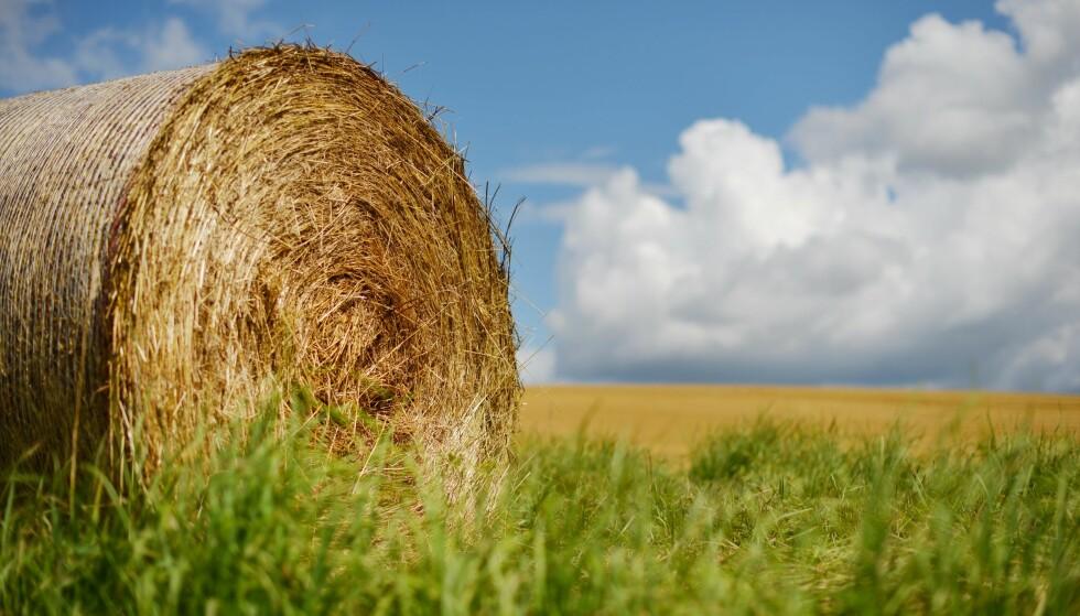 MANGE GUNSTIGE EFFEKTER: Kjernen i en regenerativ tankegang i jordbruket – mer karbon i jorda – fører med seg både tilpasning til, og begrensning av, klimaendringene.  Men å bremse litt på klimaendringene er bare én av mange potensielle gunstige bieffekter, skriver artikkelforfatteren. Foto: Frank May / NTB scanpix
