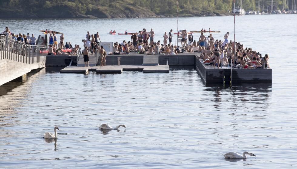 POPULÆR BADEPLASS: Brygga på Sørenga er en svært populær badeplass i Oslo sentrum. En mann er anmeldt for seksuelt krenkende atferd på badeplassen fredag formiddag. Foto: Terje Pedersen / NTB scanpix