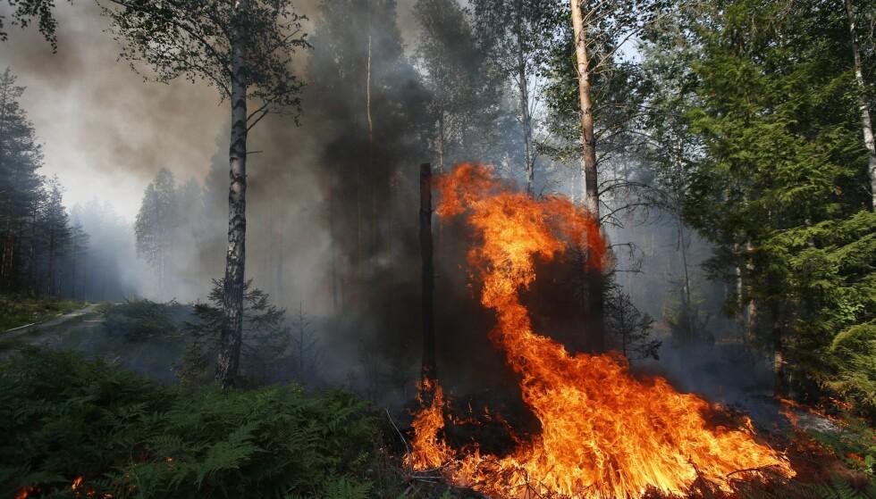 SKOGBRANN: Skogbrannfaren er på den høyeste. Brannvesenet i Oslo ber folk om å ikke grille i marka. Illustrasjonsfoto: NTB scanpix
