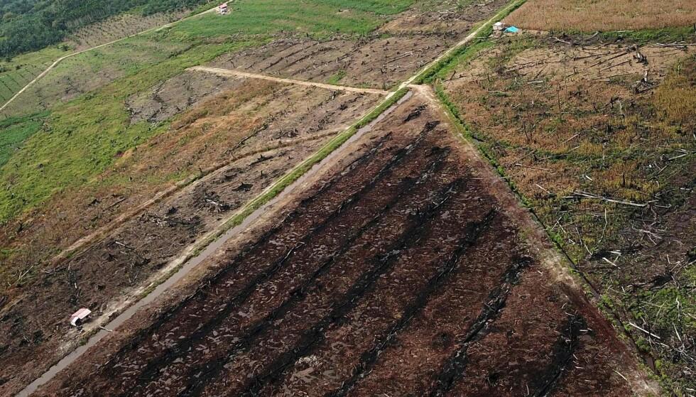 NEDBRENT: Regjeringens regnestykker baserer seg på tall der palmeolje dyrket på nedbrente regnskogsarealer i Indonesia er den samme som klimaeffekten av å dyrke raps på brakklagt jordbruksland, skriver artikkelforfatteren. Foto: AFP photo / NTB scanpix