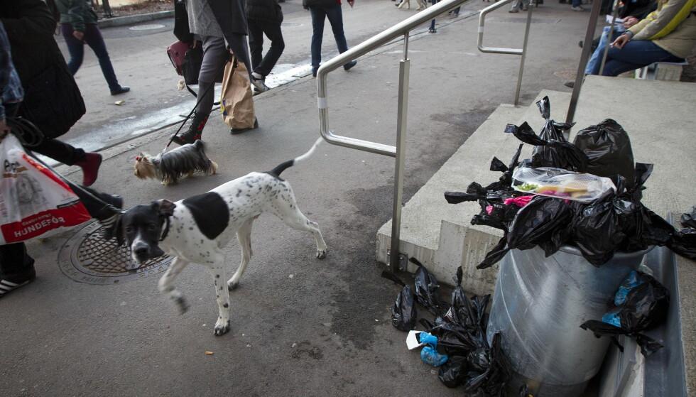 HUNDEBÆSJ TIL BESVÆR: Her er søppelkassene overfylt med hundebæsj som hundeiere har plukket opp, ute i marka opplever turgåere at hundebæsj og hundeposer ligger strødd. Foto: NTB Scanpix