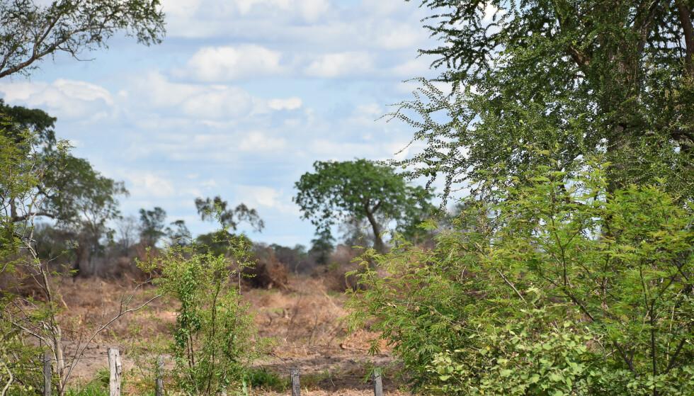 MILLIONBOT: Fem soyaselskaper får svi for å ha kjøpt soya plantet på ulovlig, avskoget land i Brasil. Et av selskapene er Bunge, hvor både DB, Nordea og Oljefondet har eierandeler. Foto: Jim Wickens