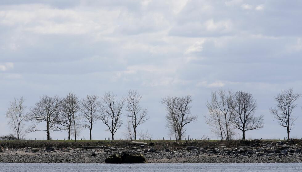 GOLD: Hart Island er New Yorks desidert største gravplass. De fleste av de omlag en million menneskene som er gravlagt her, ble lagt i jorda uten kjent identitet. Foto: NTB Scanpix