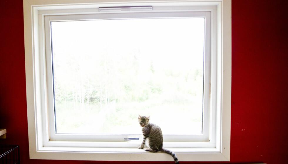 RAMLER UT: Katter som forsøker å kjøle seg ned, ramler ut av vinduene. Foto: Vegard Grøtt/ NTB scanpix