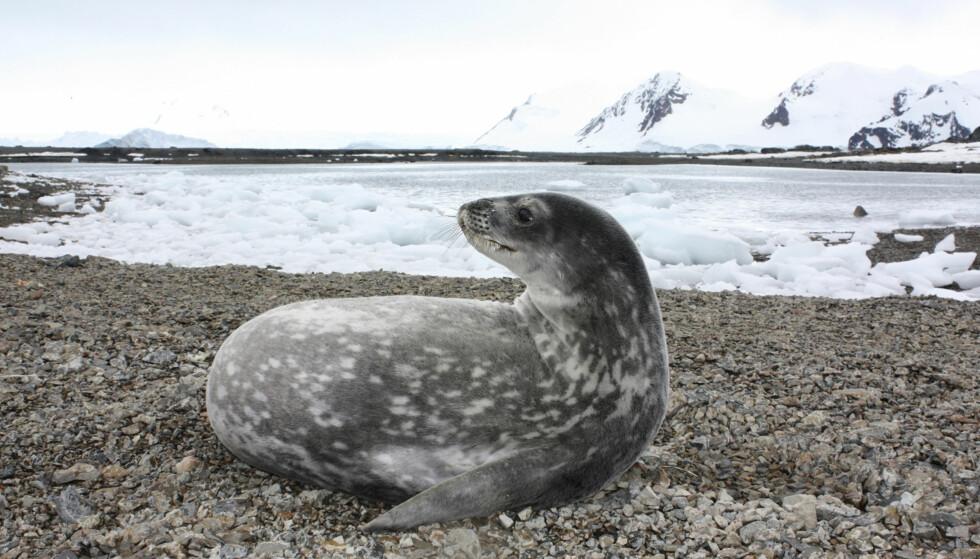 Weddellhavet i Antarktis: Vi forventer at EU legger fram et forslag om vern i Weddellhavet utenfor Dronning Maud Land i oktober, skriver statssekretær Audun Halvorsen.