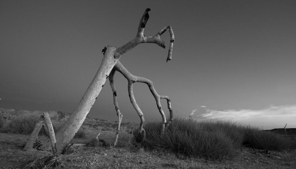 NY BOK: «Øynene i ørkenen» består av essays, reiseskildringer og over 200 bilder og handler blant annet om vår moderne overvåkningskultur. Den er også en jakt på mulige fristeder. Opplevelser i den amerikanske ørkenen står sentralt. Foto: John Erik Riley