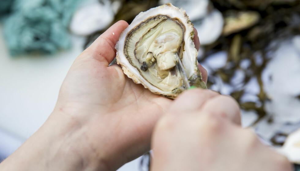 ØSTERS: Mattilsynet advarer folk mot å spise rå østers fra kystområdene i Oslofjorden og helt ned til Sørlandet etter at mengden vibrio-bakterier har økt på grunn av det varme sommervannet. Foto: Tore Meek / NTB scanpix