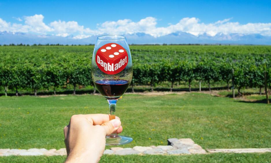 KJØLIG KLIMA: Forholdene ved foten av Andesfjellene, i Mendoza, gir kjøligere temperaturer og viner med mer nyanserte aromaer og bedre syrestruktur. Foto: Shutterstock / NTB Scanpix