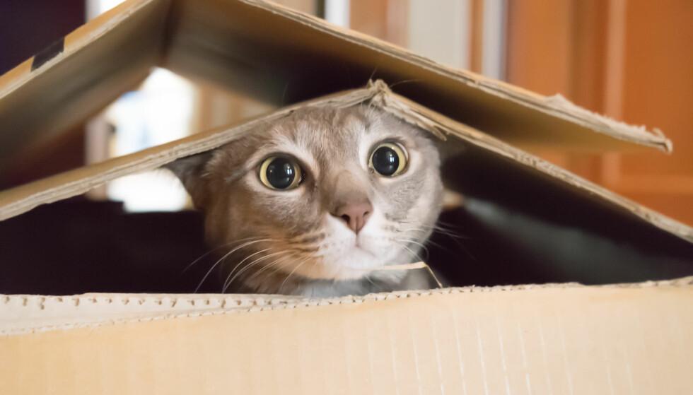 ROVDYR: - Katter er psykopater, de mangler empati og ser på mennesker som tilbakestående nyttedyr, mener Anne Gunn Halvorsen. Foto: Scanpix
